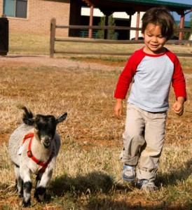 Children love the animals on the farm